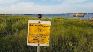 Panneau Bird nesting area article Polyphonic Feathers Scribendo