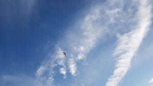 Un goéland tout en haut dans le ciel