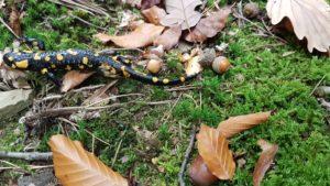 Salamander Wiener Wald blog Scribendo Vienne